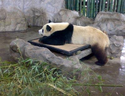 游野生动物园 - 内容